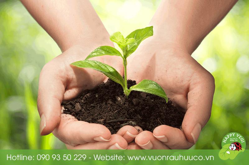 Happy Vegi - Rau sạch, rau hữu cơ, rau organic